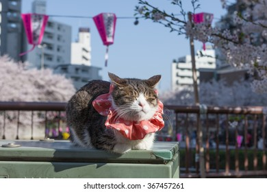 The cat at Meguro riverside. Meguro river is a very famous and popular Cherry-blossom viewing spot in Tokyo.
