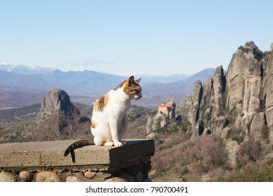 Cat and the Meteora monastery, Trikala region, Greece
