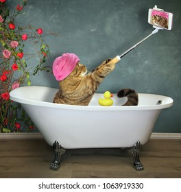 The cat with mobile phone this takes a bath.