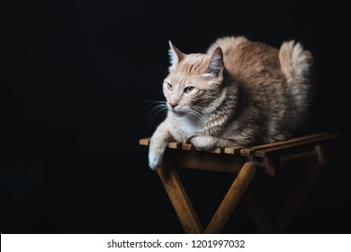 Photoshoot Of Cats Images Stock Photos Vectors Shutterstock