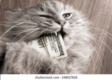 cat and money