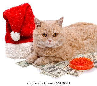 cat with the money, red caviar and Santa Claus hat on white background. year cat