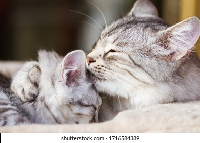 cat mother holds her daughter close by embracing her