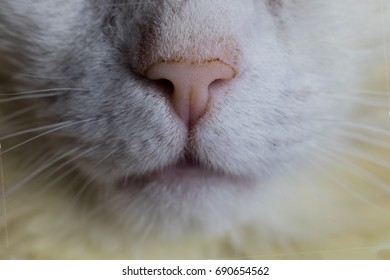 Cat Mouth