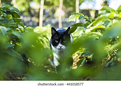 stealthy images stock photos vectors shutterstock