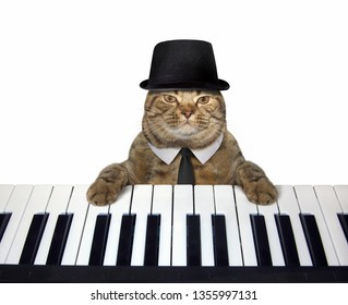 The cat musician in a hat and a tie plays the piano. White background. Isolated.