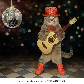 The cat musician in a red hat, a bow tie and boots plays the acoustic guitar near a mirror ball at the nightclub.