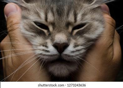 cat muzzle between human palms