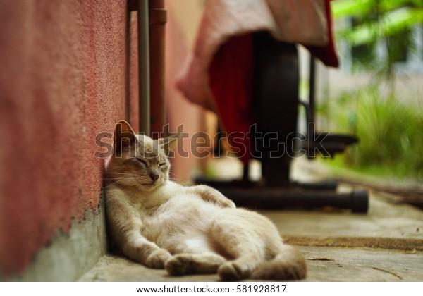The Cat naps