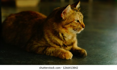 cat with natural posture lay on the floor looking out of window