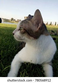 cat with nature