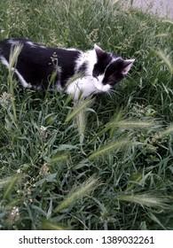 Cat in nature grean grasss