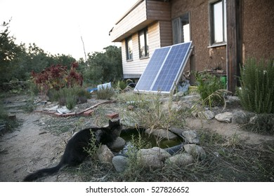 A cat with naturel building and solar panel.