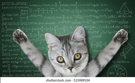 cat near the board