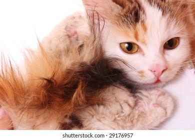 Cat near breast