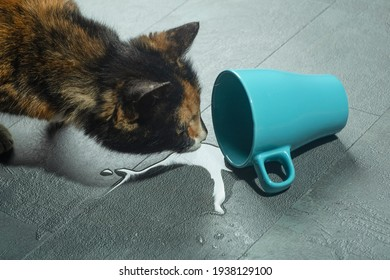 A cat near a fallen cup of water. A cautious cat looks at water from a cup that has fallen to the floor.