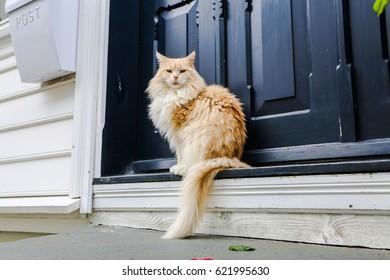 Cat near wooden door on the street