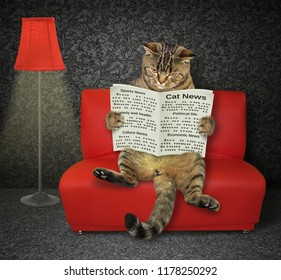 The cat with a newspaper sits on the red near a floor lamp.