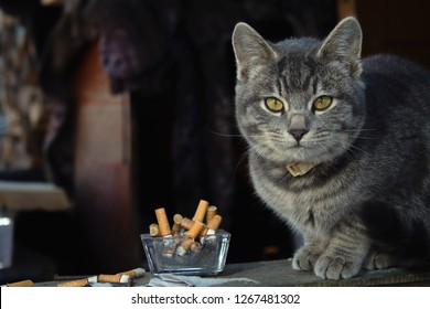 Cat next to an ashtray full of cigarettes. Environmental pollution.