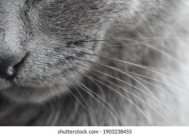 cat nose whiskers background gray