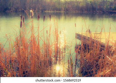 cat o nine tails on a pond with sun shining