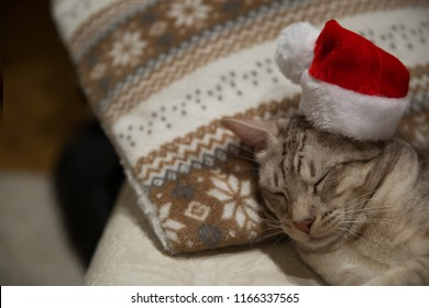 Cat ocicat in Christmas red hat, peacefully sleeping on the sofa on ornamented pillow.