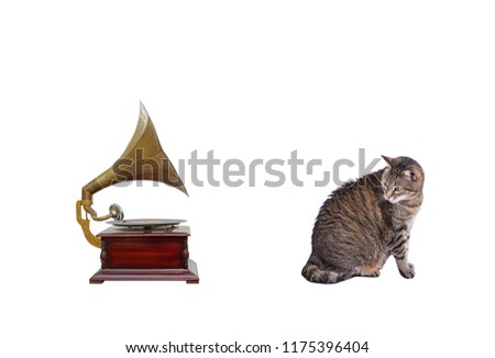 Cat and an old gramophone isolated on a white background