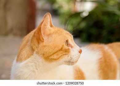 A cat in the old town of Gibraltar. Gibraltar is a British Overseas Territory located on the southern tip of Spain.