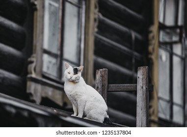 Cat on background carved wooden trim facade. Old historic house. Russian architecture. Chopped house with carved wooden architraves. Tomsk, Russia