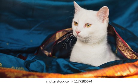 Cat on a background of colored beautiful fabric. Eastern motifs.