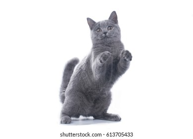 cat on a background isolated