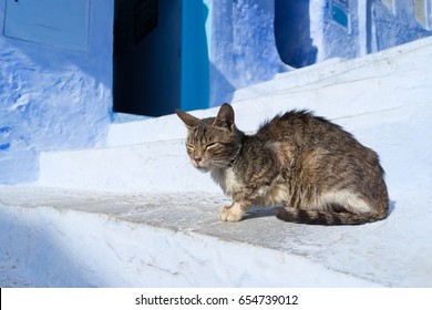 Cat on the blue street in Chefchaouen, Morocco. Chefchaouen is the chief town of the province of the same name, and is noted for its buildings in shades of blue.