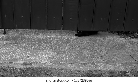 A cat on the cardoor