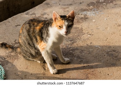 a cat on cement floor