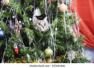 Cat on Christmas tree. Naughty cute kitten. New Year