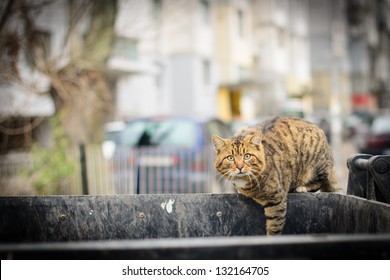 Cat on container