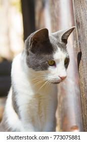 Cat on Crete, Greece