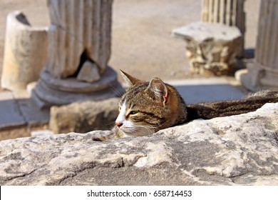 Cat on Ephesus ruins. Ancient Greek city on the coast of Ionia near Selcuk. Izmir province. Turkey. Asia Minor