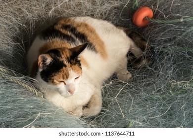 cat on fishing net pile