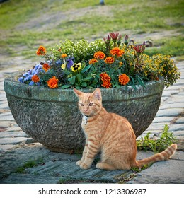Cat on a footpath in front of a flowerpot