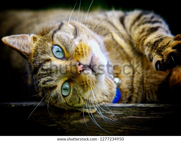 Pleasant Cat On Garden Bench Stock Photo Edit Now 1277234950 Inzonedesignstudio Interior Chair Design Inzonedesignstudiocom