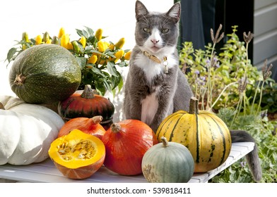 Cat on garden table with pumpkin