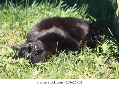 cat on the gras