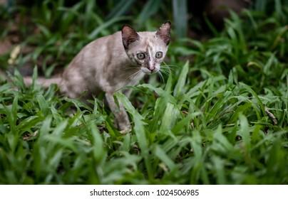 Cat on green grass in garden