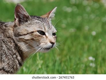 Cat on Hunt