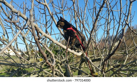 Cat on a lead climbing a tree