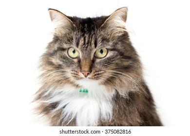 cat on a light background