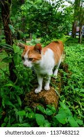 cat on log in garden