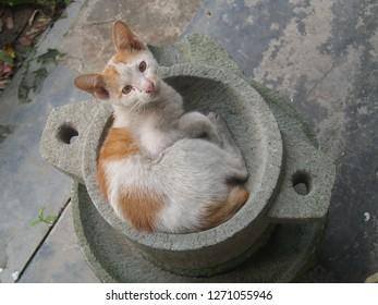 Cat on the Millstone