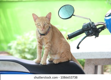 Cat on the motercycle